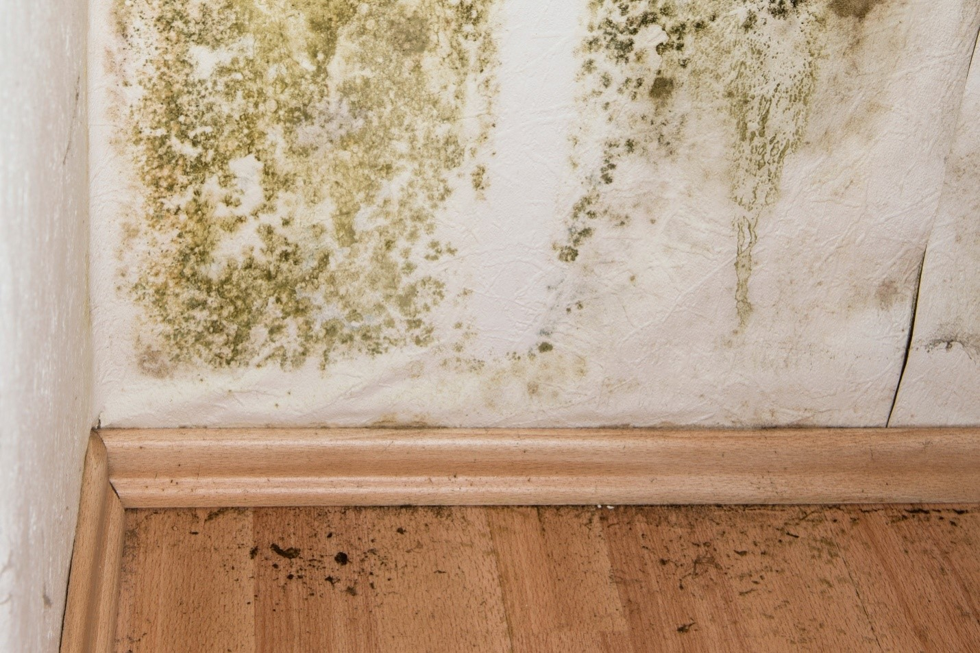 How to Deal with Mold Growth in Your Apartment